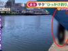 【釣り】北海道でサケの引っ掛け釣りで5人摘発。なぜ引っ掛け釣りはダメなのか