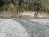 【渓流フィールドレビュー第11弾】「秩父で渓流魚は釣れるのか」を検証してみた【横瀬川(埼玉県)】