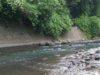 釣り/渓流フィールドレビュー/桂川(山梨県)